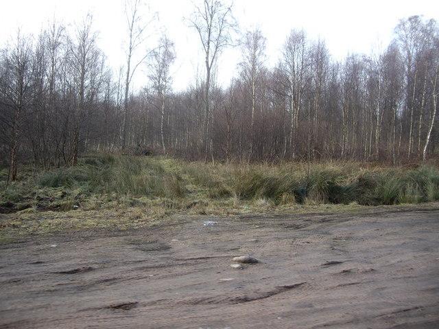 Birches on Dalhaikie Flat