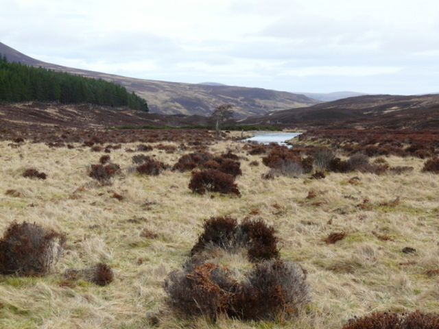 Moorland by Craggie Water