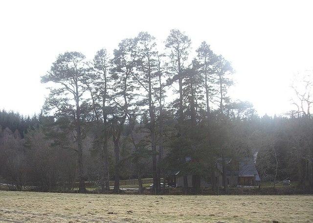 Cottages between Bogloch Burn and A93