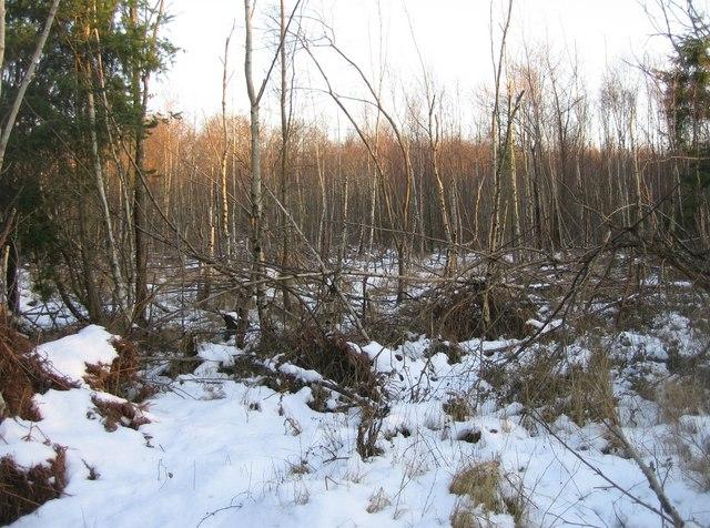 Carpenters Down Wood
