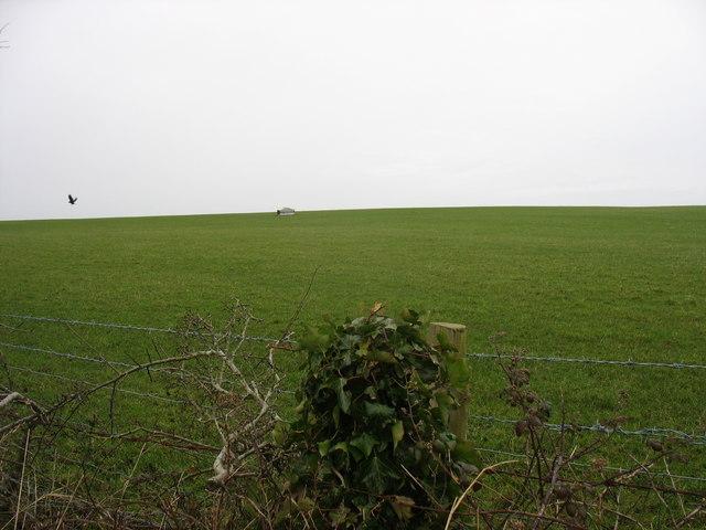 Improved grassland west of the hamlet of Llaneuddog