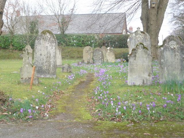 Sway: gravestones and crocuses