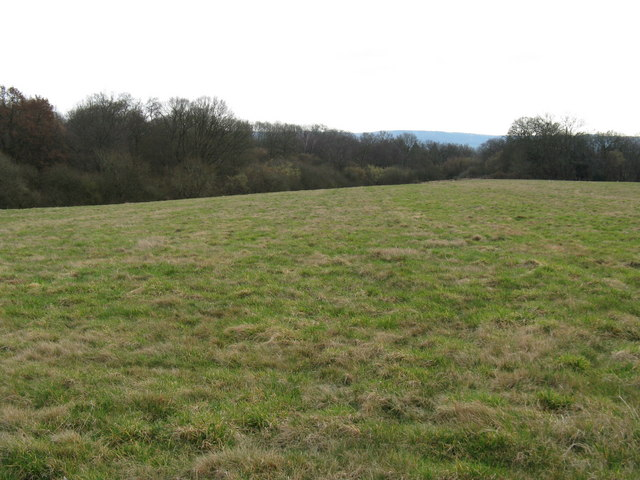 Looking south over green field to woods