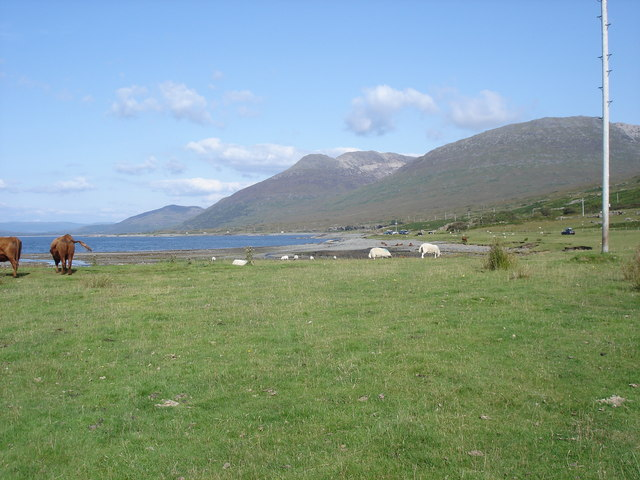 Cattle by Loch na Keal - view to the east