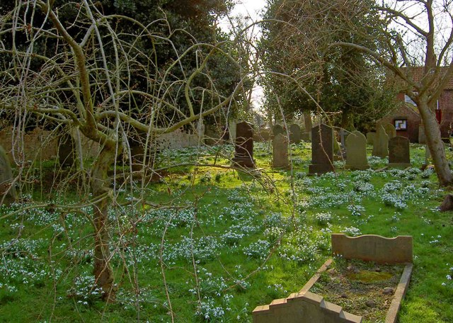 Snowdrops in profusion in Kirk Bramwith churchyard #2
