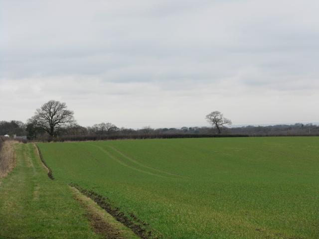Fields of Marsh Farm