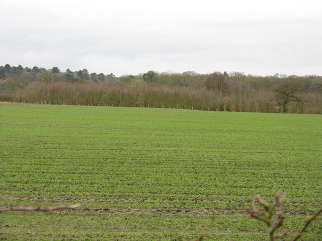 Fields by  Birkenheath Lane