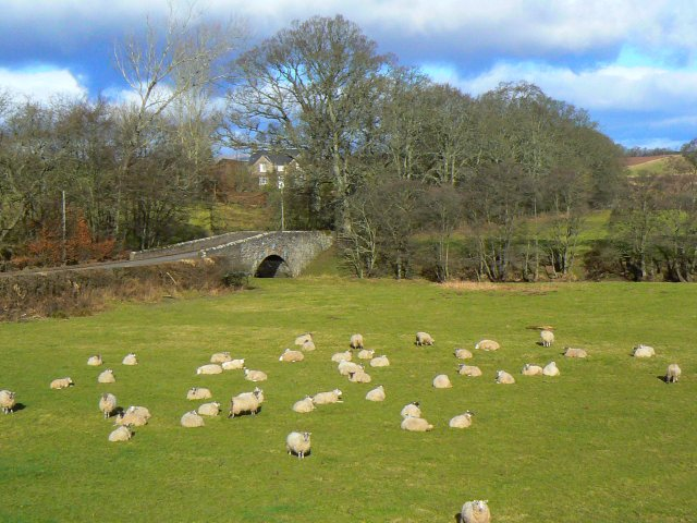 Sheep by the burn