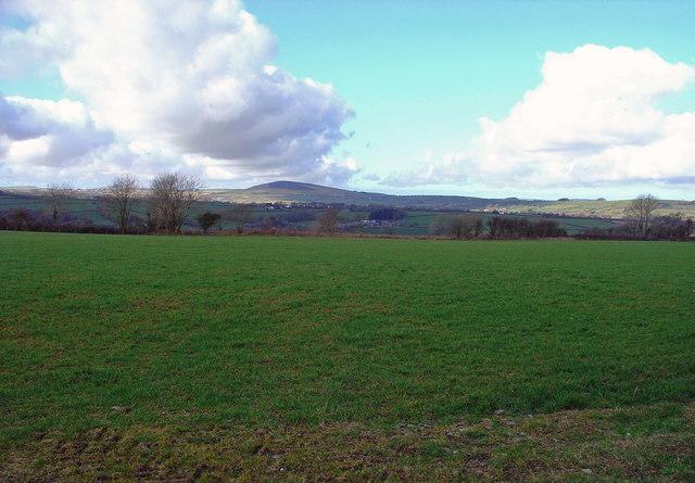 Pasture near Cilrhedyn