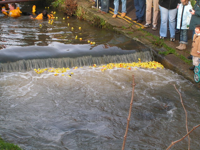Duck Race, River Lim (2)