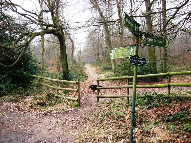 The Entrance to High Scrubs Wood