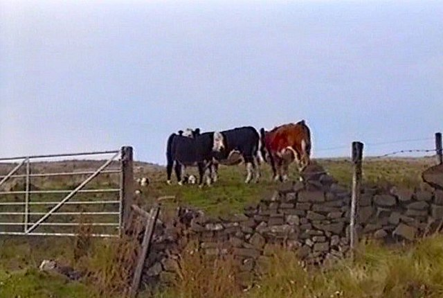 Grazing Land above Burbage