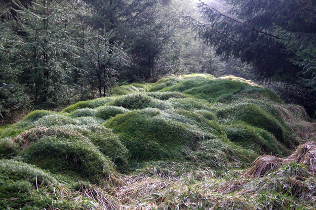 Mossy humps