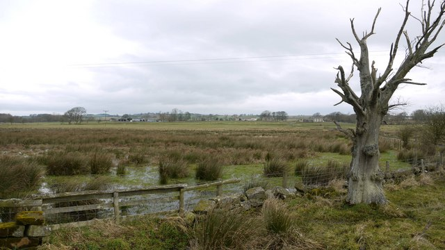 Marshland near Fenwick Shield