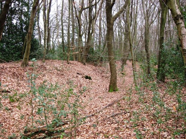 Grim's Ditch in High Scrubs Wood