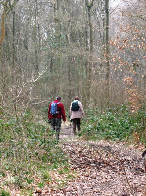Walking along the Chiltern Way in High Scrubs Wood