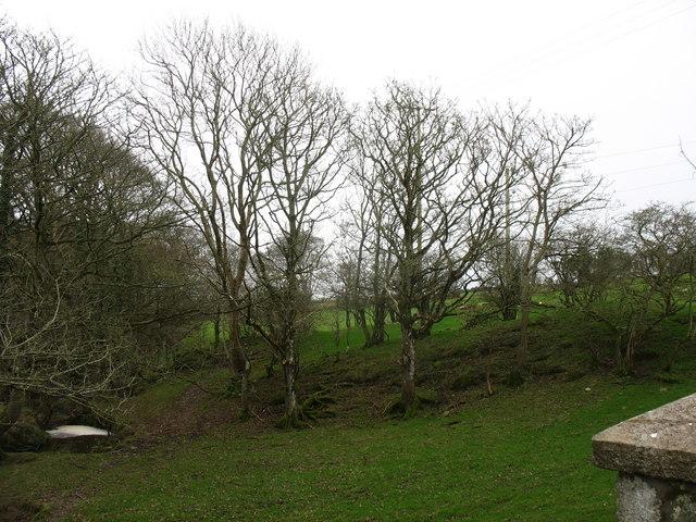 Woodland below Pont y Deri