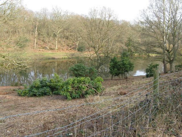 Pond near Roper's Farm