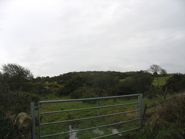 Gorse covered knoll at Bryniau Teici farm