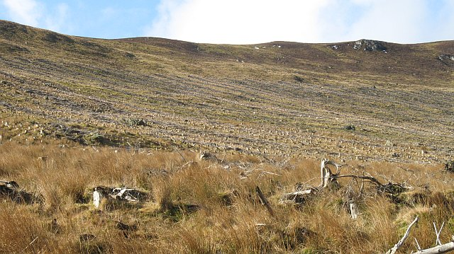 Former forest, Glen Prosen
