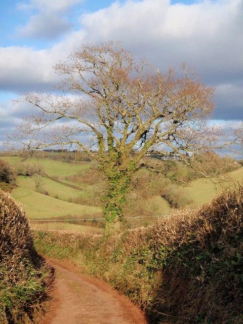Oak, Middle Ramshill Lane