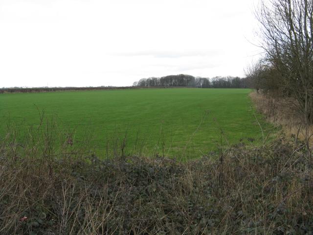 Fields of Holly Tree Farm