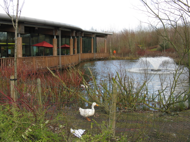 Water Feature, Stafford Services - M6 Southbound