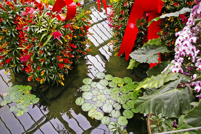Water feature, Princess of Wales Conservatory, Kew Gardens