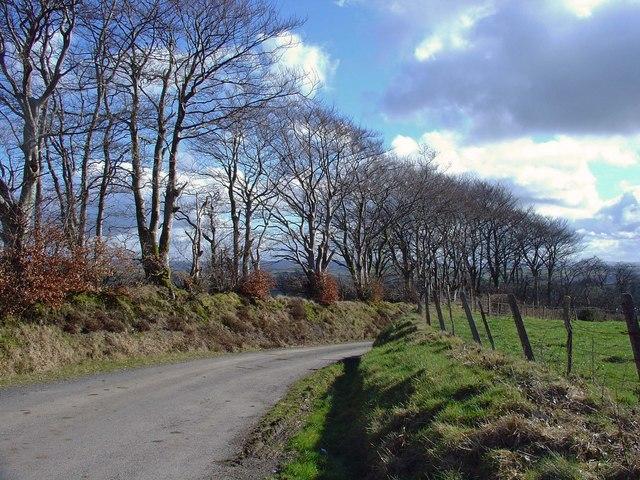 Trees on the roadside near Blaen-ffynnon, Cynwyl Elfed