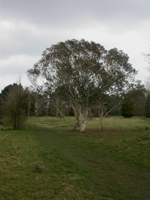 Muscliff Arboretum