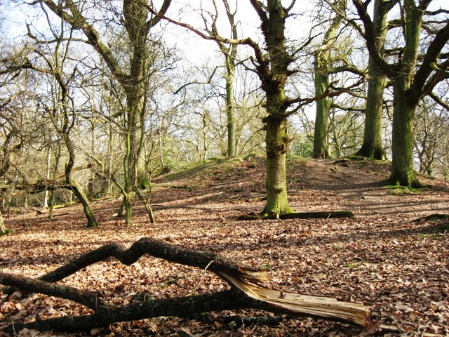 Bronze Age Barrow, Moneybury Hill
