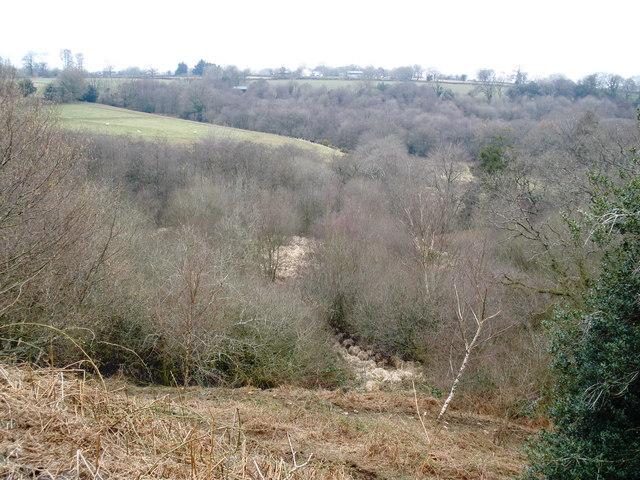 Woodland, near Higher Luxton