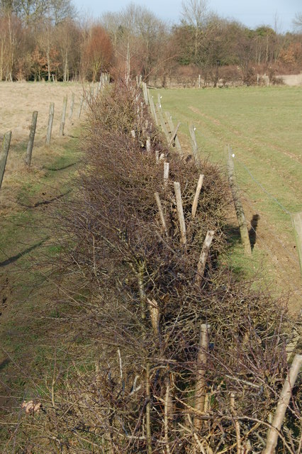 Footpath and damaged hedge