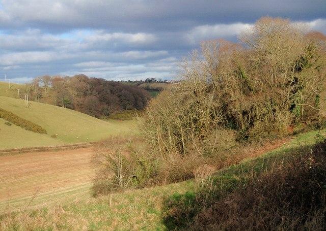 Edge of wood by Old Widdicombe Road
