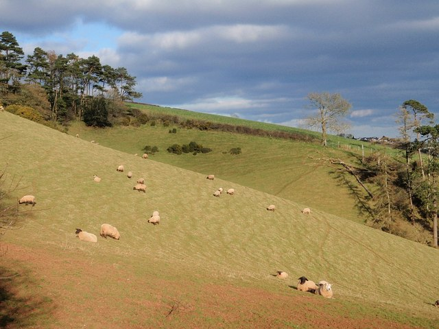 Sheep on Beacon Hill