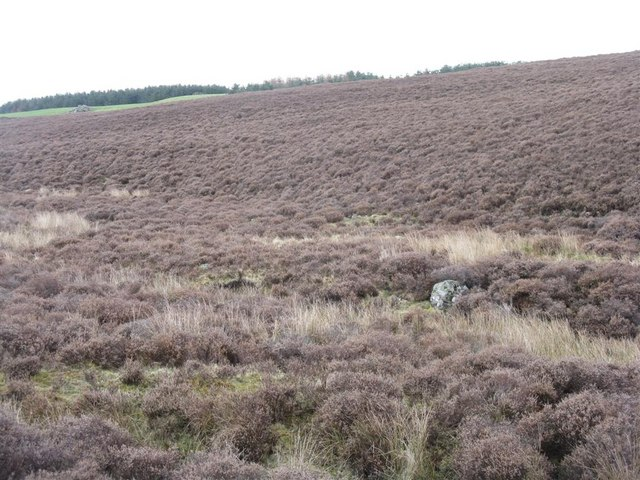 Heather moorland near Harehope