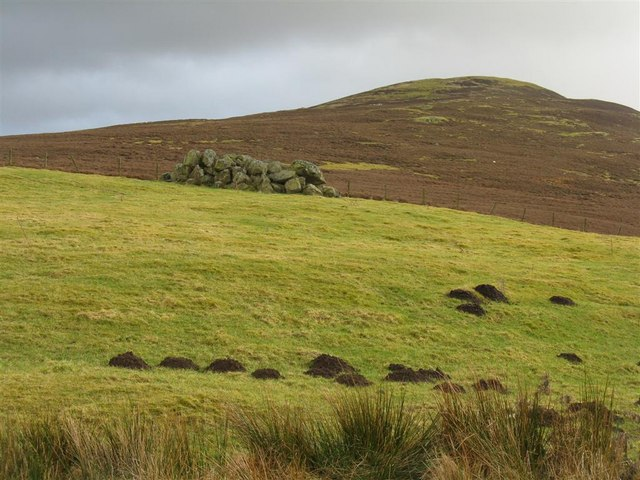 Mole hills, stone heaps and heather