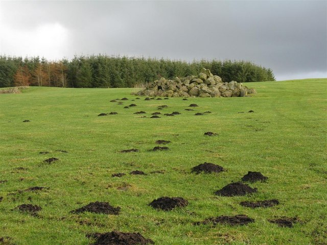 Mole hills at Harehope