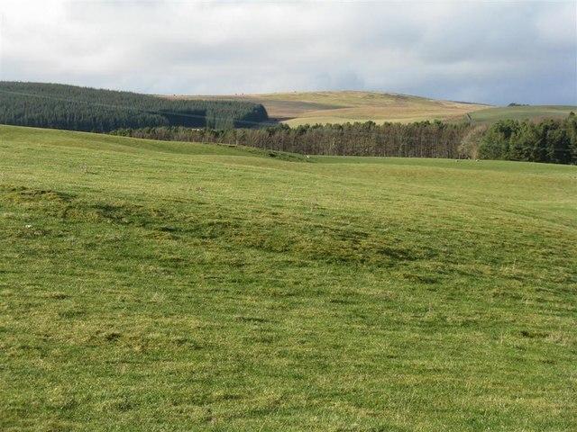 Forestry and farmland near Stewarton