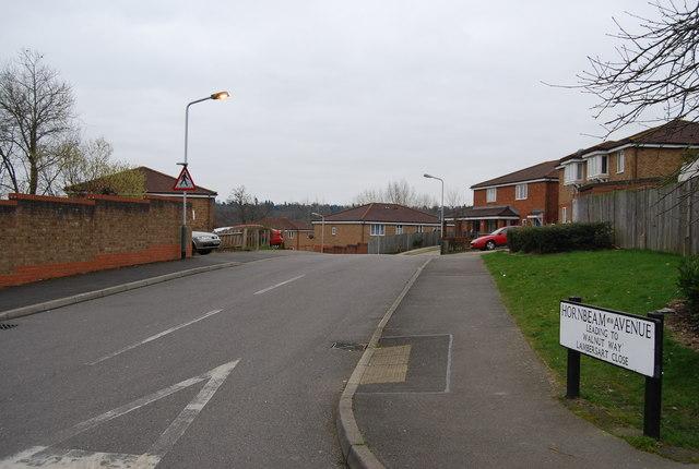 Hornbeam Avenue