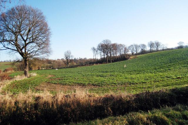 Field near Tenterden