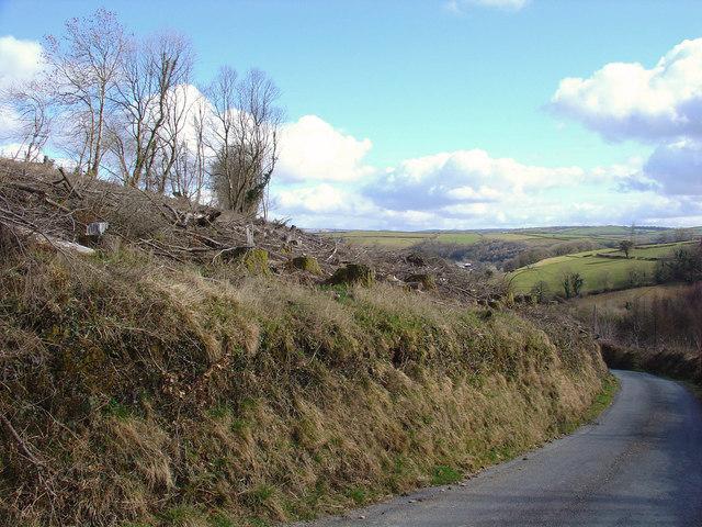 Felled area near Troed-y-rhiw, Cynwyl Elfed