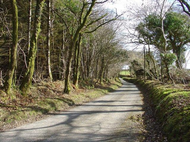 Road by woodland edge near Blaen-y-coed, Cynwyl Elfed