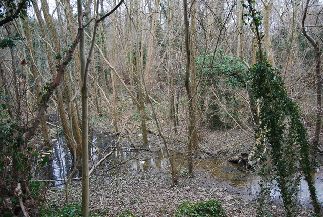 Unnamed stream in the woods by Home Farm Lane, North Farm Estate