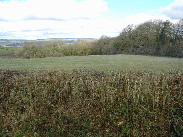 Field near Ty-rhos, Eglwysnewydd