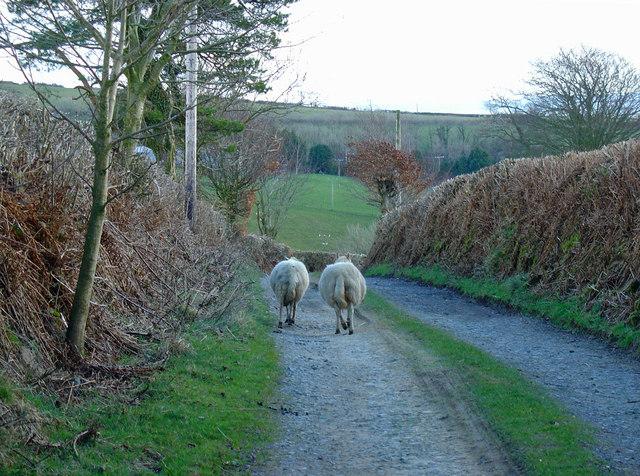 Track to Cil-wen, Aber-nant
