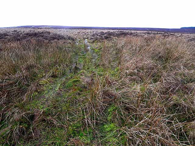 Emblehope Moor