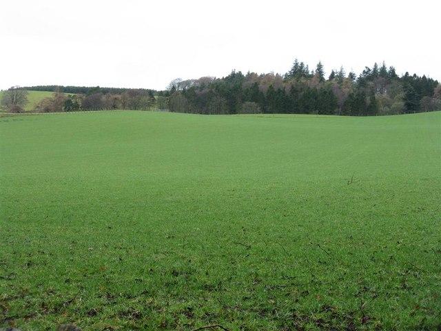 Pasture near Barony Castle