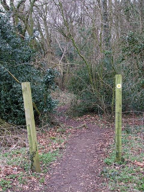 Path into Braid Wood