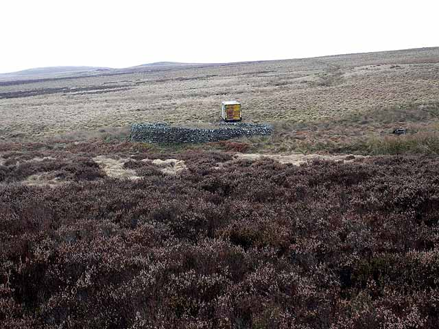 Sheepfold on Emblehope Moor